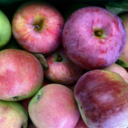 freetoedit apples fall fruit healthyliving