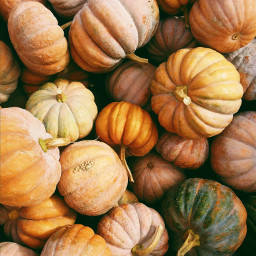 pumpkin halloween pumpkins background backgrounds freetoedit