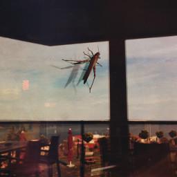 reflection grasshopper