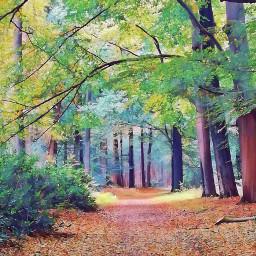 trees woods floramagiceffect background myoriginalphoto freetoedit