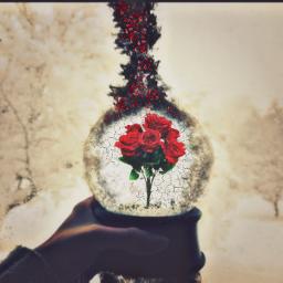 snowglobe roses creepyedit redrose winter