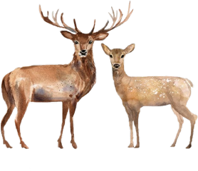 freetoedit deer doe woodland animals