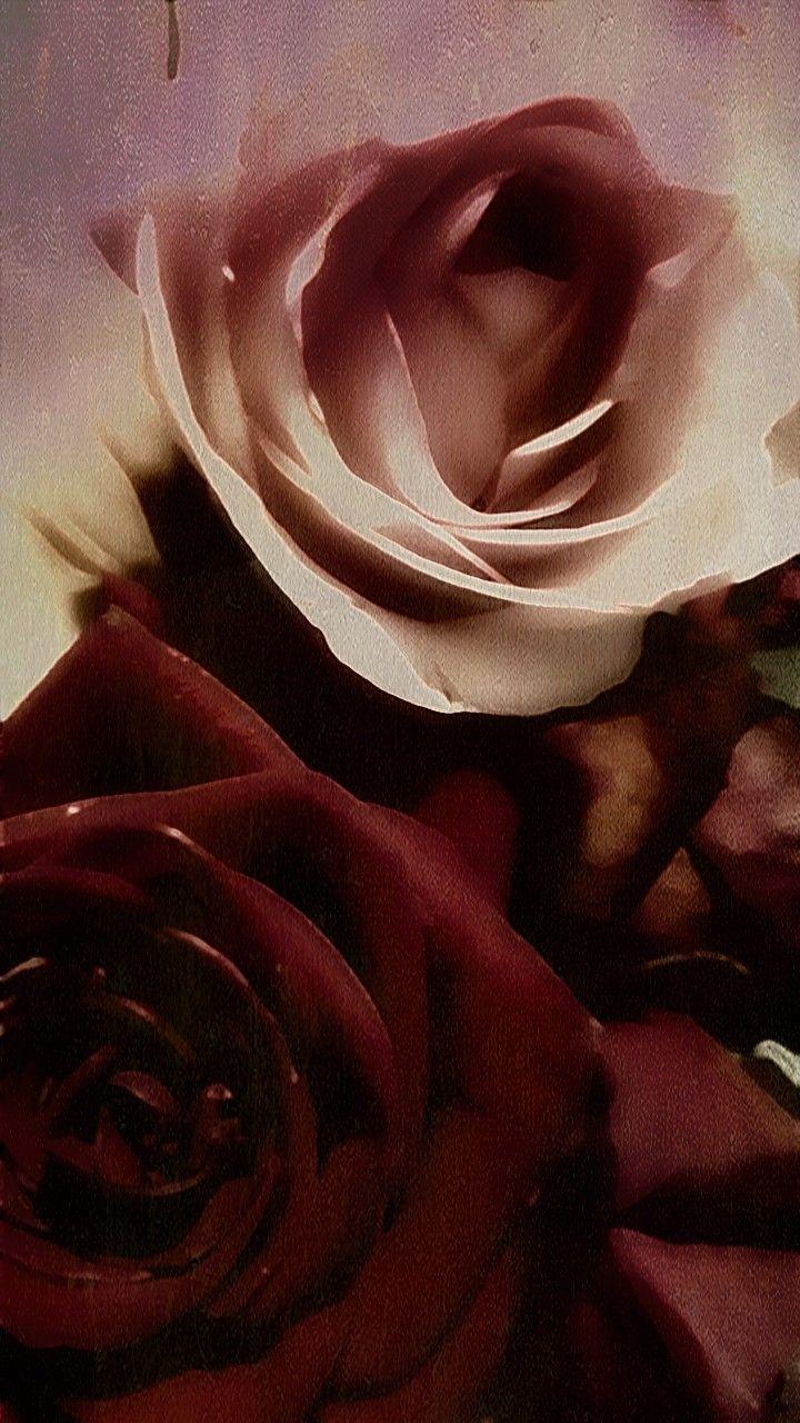 #freetoedit #remix #roses #nature #beauty 🙏❤🌹