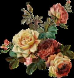freetoedit roses glitch pastel aesthetic