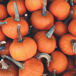 pumpkin halloween pumpkins background backgrounds freetoedit