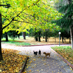 photography nature autumn dogs trees freetoedit