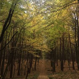 photography nature autumn forest trees freetoedit