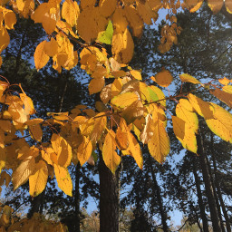 photography nature autumn trees leaves freetoedit