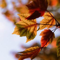 freetoedit film2effect autumn film2