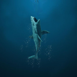 freetoedit aziz vipaziz shark sea water deep themeg meg dolphins fish picsart 0 wallpaper swim dinosaur goodzilla scubadiver scubadiver scuba crawl crawl2019 animal 666 Yes beauty blue swimming beach