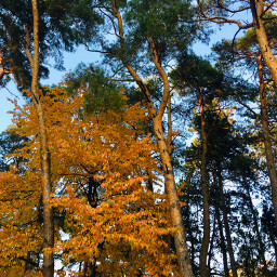 photography nature autumn trees forest freetoedit