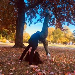 fall autumn yoga adventure travel freetoedit