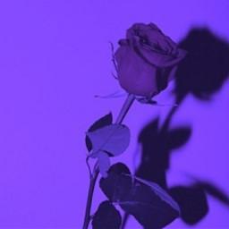 freetoedit aesthetic purple photography mood