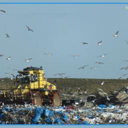 photography vehicle wheels rubbish seagulls
