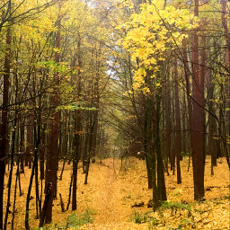 photography nature autumn oktober forest freetoedit