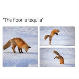 meme memes text post funny