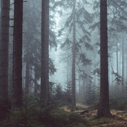 spooky halloween woods background backgrounds freetoedit