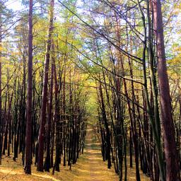 photography nature autumn oktober forest freetoedit