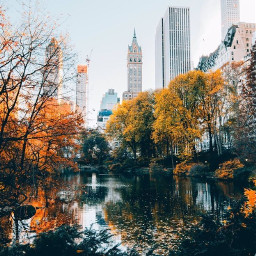 freetoedit newyokcity centralpark autumn autumnleaves