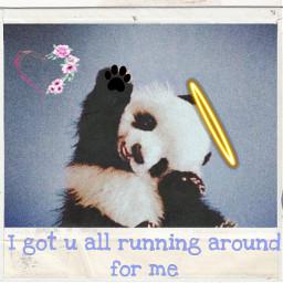 animallove panda freetoedit