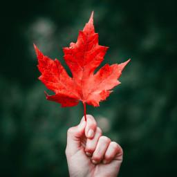 autumn fall leaf leaves freetoedit