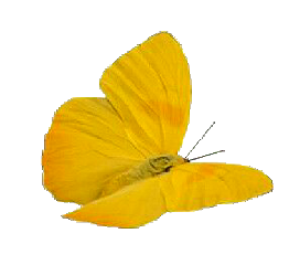 butterfly yellow color animal art freetoedit