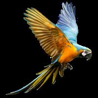 #parrot #flying #animal #clipart