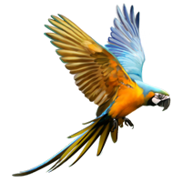 parrot flying animal clipart freetoedit