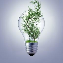 freetoedit breakfree tree glass bulb