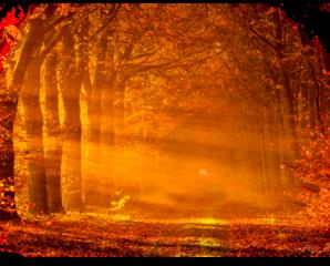 fall background freetoedit