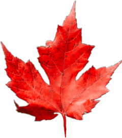 fallmood freetoedit. fall fallleaf leaf freetoedit