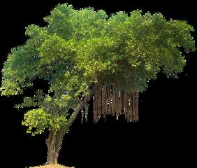 jungle tree freetoedit