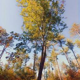 fall leaveschanging bigtree treelove explore
