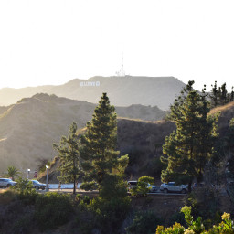 hollywood hollywoodsign dawn sunrays trees freetoedit