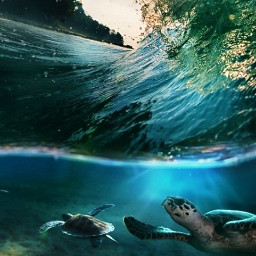 freetoedit turtle beautiful cool wow