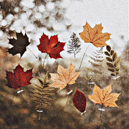 freetoedit window tape leaves browns
