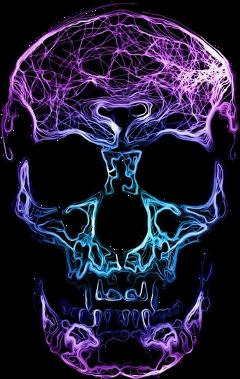 calavera freetoedit scskulls skulls