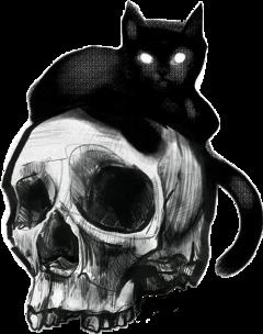 freetoedit craneo calavera bones gato scskulls skulls