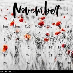 freetoedit poppy rememberance srcnovembercalendar novembercalendar
