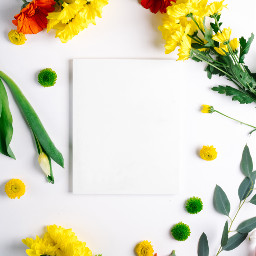 flowers background backgrounds freetoedit