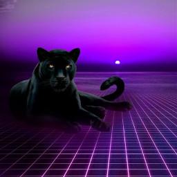 panther nuit violet noir immeuble