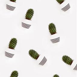 cactus background backgrounds freetoedit
