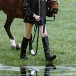 freetoedit horse pony show