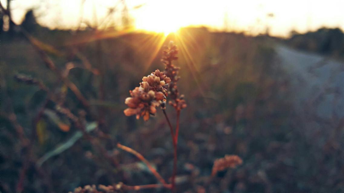 #freetoedit #pa @pa #photography #sunny #autumn #mycamera