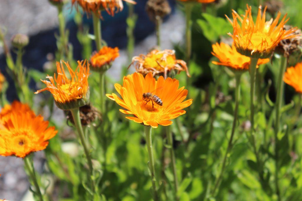 Beautiful Bee :)