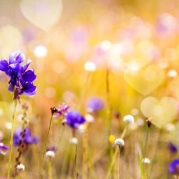freetoedit flower flowers green luck