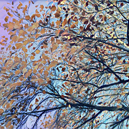 freetoedit abstract treeart branches picsarteffects