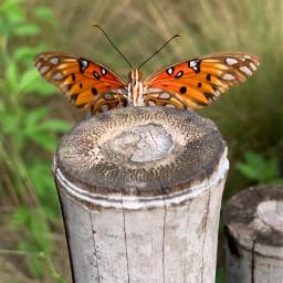 nature animal edit cute wings