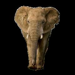 elephant freetoedit