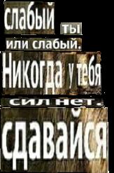 #цитаты #цитатыволков #волк #словацитаты #искусство